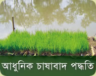 Rice cultivation methods
